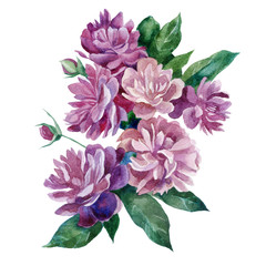 Watercolor illustration. Peonies. A bouquet of peonies.