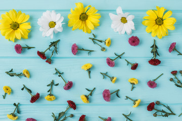 Chamomile and dahlila flowers scattered on blue wood. Flat lay, top view.