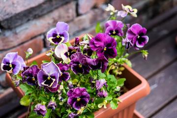 Purple flowers in a bowl