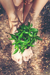 Hands holding young plants on the  arid soil and cracked ground or dead soil  in the nature park of growth of plant for reduce global warming.  Ecology concept.
