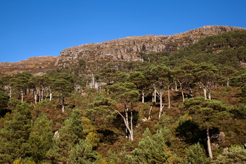 Pinewood and Mountain in Shieldaig in Scottish Highlands