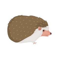 animal flat color hedgehog icon