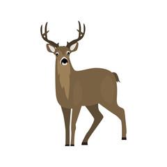 animal flat color deer icon