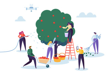 Farmer Pick Apple Harvest to Basket. Woman Character Harvesting Ripe Fruit from Green Organic Tree. Man Control Farm with Drone. Country Garden Landscape Flat Cartoon Vector Illustration