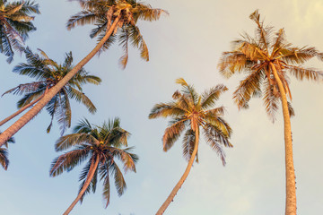 Silhouettes of palm trees against the blue tropical sky, bottom view