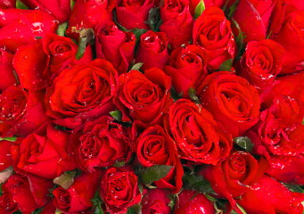 red rose flowers roses nature decoration