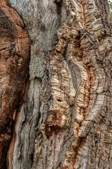 The tree is a woody trunk whose branches only come out at a certain height from the ground