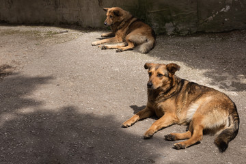 Two stray dogs resting on the road near the concrete wall