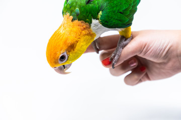 Close up of a bird standing on a woman's hand