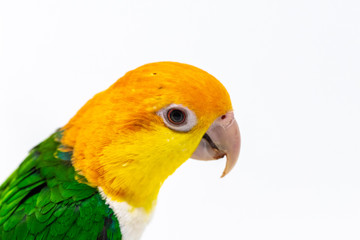 Head shot of an exotic  bird