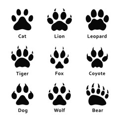 Animals footprints, paw prints. Set of different animals and predators footprints and traces. Cat, lion, leopard, tiger, fox, wolf, coyote, dog, bear