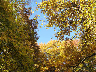 Colorful foliage in the autumn park. Autumn trees sky background. Autumn leaves. Fall landscape