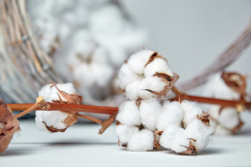 A Branch of fluffy cotton flowers and a wicker basket on a white wooden table