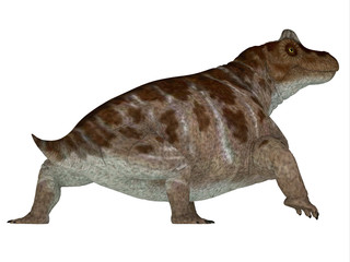 Keratocephalus Dinosaur Tail - Keratocephalus was a primitive herbivore dinosaur that lived in South Africa during the Permian Period.
