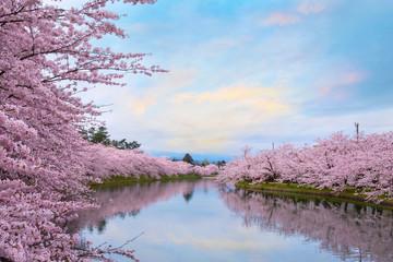 Foto op Plexiglas Asia land Full bloom Sakura - Cherry Blossom at Hirosaki park, Japan