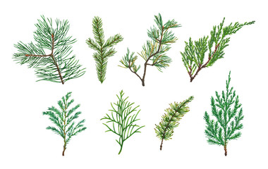 Set of Spruce, Fir, Pine or Christmas tree branch