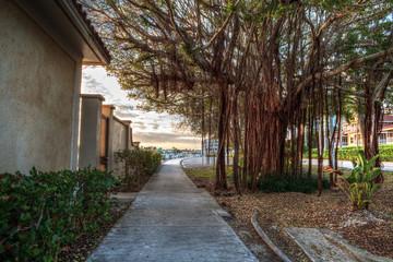 Strangler fig tree along the Harbor at golden hour as day breaks