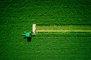 Wall Mural - Tractor mowing agricultural green field, aerial drone view