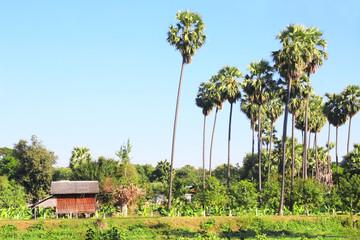 Hut on a banana plantation, Myanmar, Asia