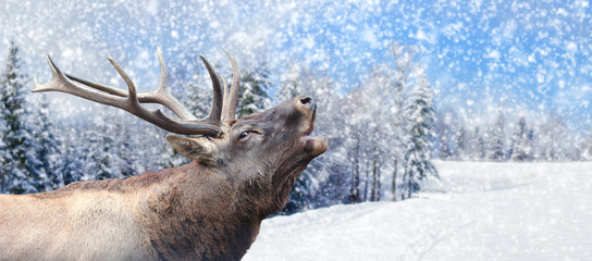 Fototapete - Deer on winter background