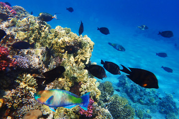 Deurstickers Onder water coral reef in egypt