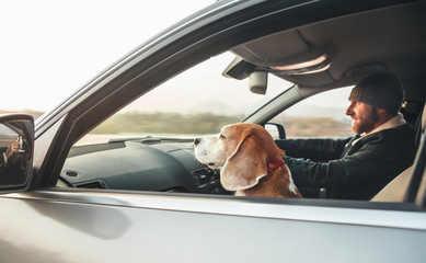 Man riding a car and his beagle dog companion sits near him on front seat