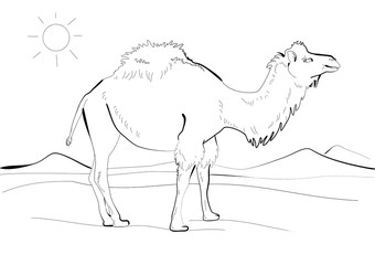 Hand drawing of a camel walking in the desert. Line art. Black ink drawing illustration. Free hand sketch of a camel on white background. Stylized cartoon egyptian camel. Graphic animal.