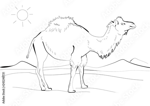 8b22463a1af38 Hand drawing of a camel walking in the desert. Line art. Black ink drawing