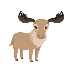 Cute deer animal cartoon character vector Illustration
