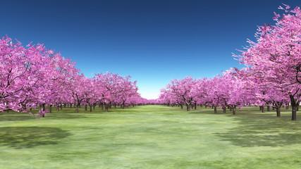 Photo sur Plexiglas Olive 桜景色