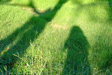 Shadow of a female standing on a green grass field with a tree and sun light in bright day