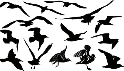 fifteen gulls silhouettes on white background