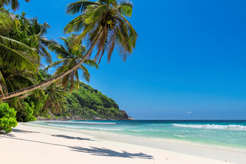 Paradise island. Sandy beach with coco palm and turquoise sea.  Jamaica island. Summer vacation and travel concept.