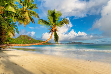 Tropical beach at sunrise with coco palms in Seychelles. Summer vacation and travel concept.