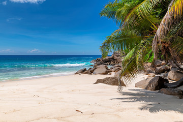 Fototapete - Tropical sandy beach with palms and turquoise sea in Seychelles island.  Summer vacation and travel concept.