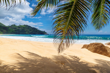 Sandy beach with palms and turquoise sea in Seychelles island.  Summer vacation and travel concept.