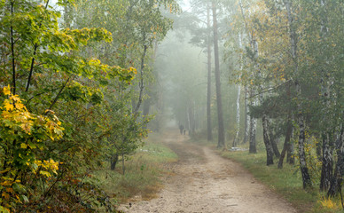 Forest. Fog. Autumn leaves. Autumn colors. Have a walk in the forest