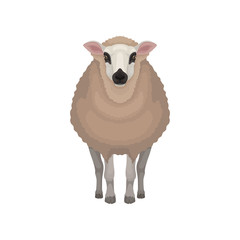 Flat vector icon of kerry sheep. Domestic animal with brown coat, black nose and circles around eyes. Livestock farming
