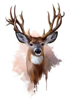 Deer with spreading antlers watercolor painting