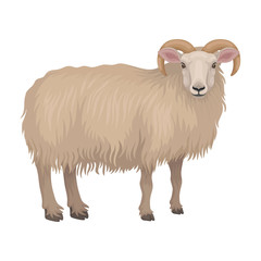 Detailed flat vector icon of dorset male sheep. Cute farm animal. Ram with beige woolly coat and curved horns