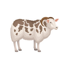 Flat vector icon of jacob sheep, side view. Domestic animal with horns and white wool with brown spots. Livestock farming
