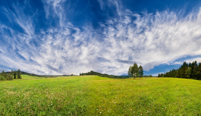 green fresh spring meadow - panoramic picture