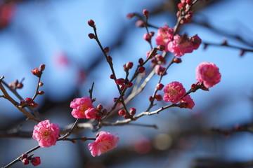 浜離宮庭園の花