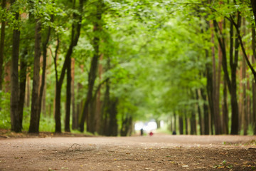 Empty road in park surrounded by green trees growing in alley on summer day