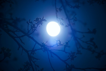 moon in the branches of an Apple tree
