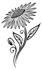 Florale filigrane Wiesenblume mit Blättern. Sommer Blumenranke. Schwarz.