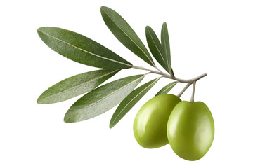 Olive branch with two green olives, isolated on white background