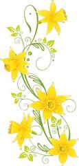 Osterglocken zum Osterfest. Narzissen. Frohe Ostern. Bunte Frühlingsblumen.
