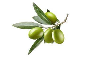 Olive branch with green olives, isolated on white background Wall mural