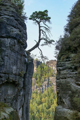 Saxon Switzerland, Elbe Sandstone Mountains, rock formation, mystical tree,, Germany